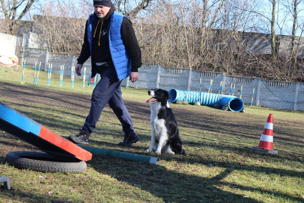 agility-border-collie-mia