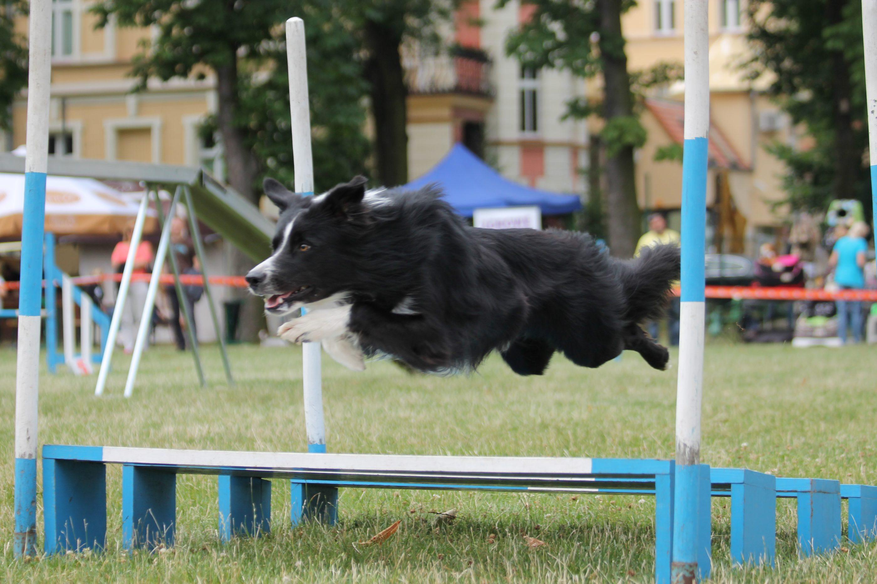 agility skok w dal
