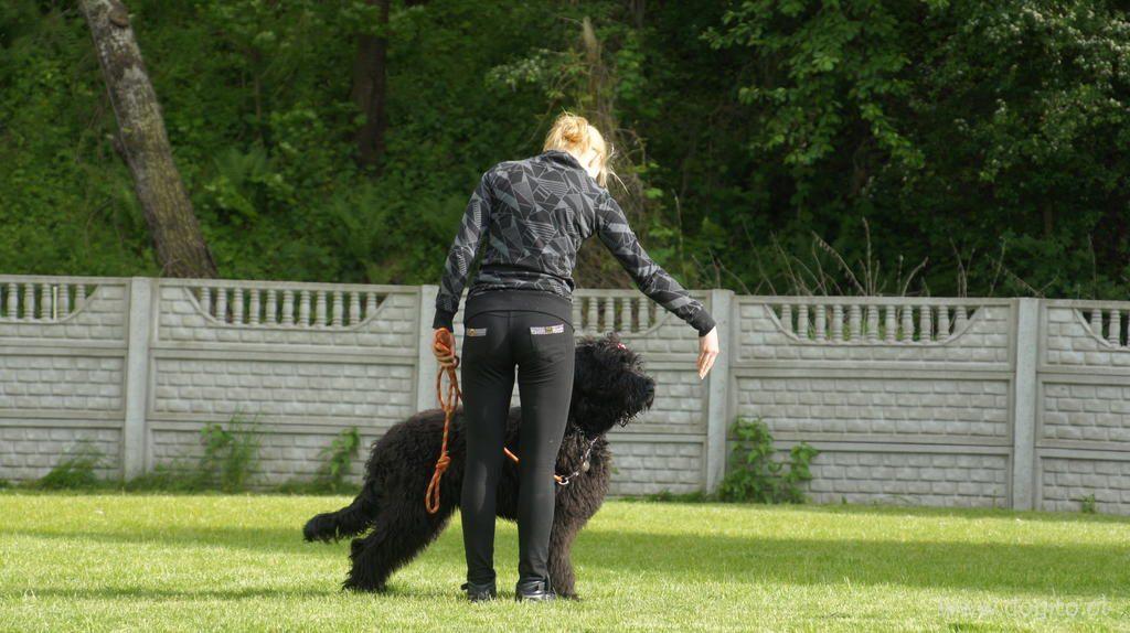 posluszenstwo-czarny-terier-rosyjski