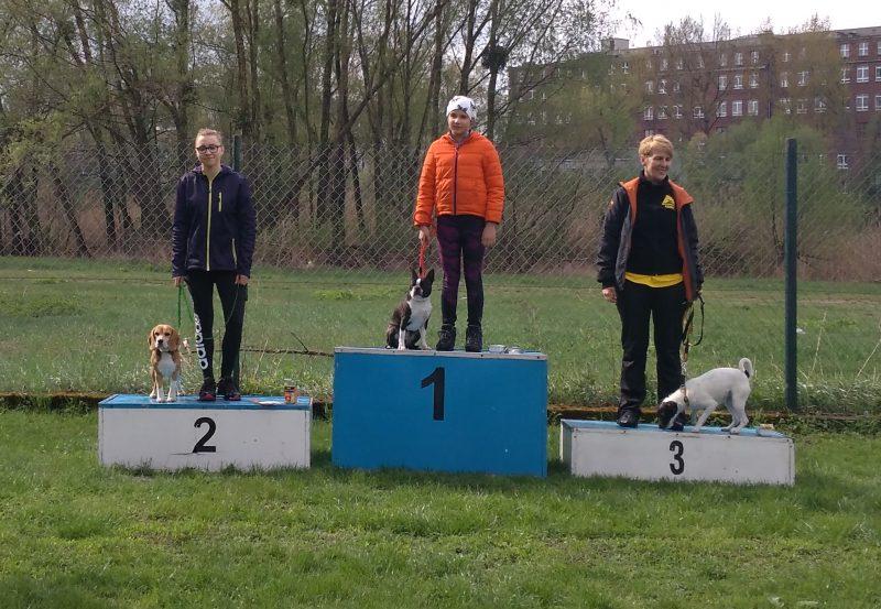 beagle-podium agility