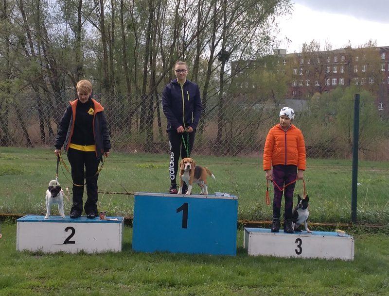 beagle agility niskie łąki