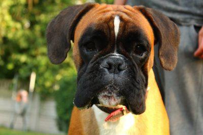 Szkolenie psów- kurs czerwiec 2020