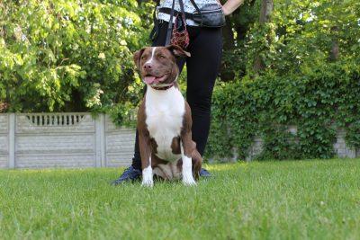 Szkolenie psów- kurs sierpień 2020